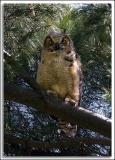 Owl_D2X_5421.jpg