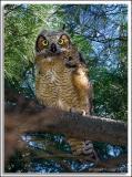 Owl_D2X_5374.jpg