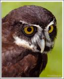 Owl_D2X_5795.jpg