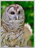 Owl_D2X_5798.jpg