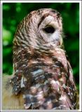 Owl_D2X_5801.jpg