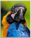 Parrot_D2X_5759.jpg