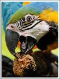 Parrot_D2x_5761.jpg