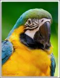 Parrot_D2X_5739.jpg