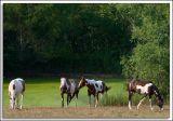 Horses_D2C_3099.jpg