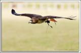 Raptor-Rehab_025.jpg