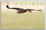 Raptor-Rehab_026.jpg