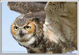 Avian Reconditioning Center
