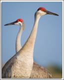 Florida Birds 2008