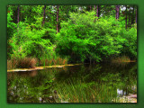 Bayou_Reflection