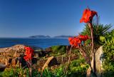 praia da joaquina flores