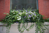 Window Flower Box - St John's Lutheran Church