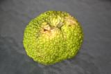 Osage Orange Fruit