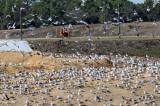 Landfill - Marion County, Florida