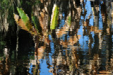 Water Reflections - Wildlife State Park