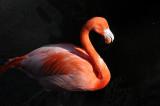 Flamingo - Wildlife State Park