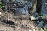 Sandhill Crane - Wildlife State Park