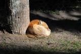 Sleeping Fox - Wildlife State Park