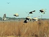 Paynes Prairie Preserve State Park, Florida