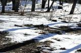 March Snow - Time Landscape Garden