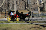Horse Carriage near Sheep's Meadow