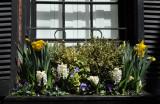 Window Flower Box Spring Flowers