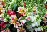 Alstroemeria & Sweet Peas - Flower Market