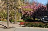 NYU Athletic Center Gardens