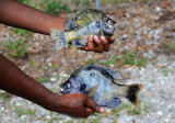 Recent Catch