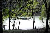 Green Mossy Pond