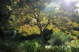 Dogwood - Garden View