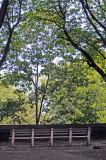 Linden Tree Grove Area