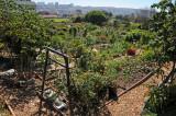 Fort Mason Community Garden - San Francisco, CA