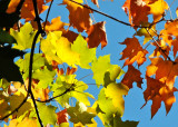 October 8, 2010 Photo Shoot