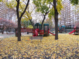 Fall - Washington Square Village Gardens