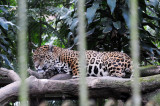 Parque Zoological Simon Bolivar