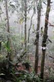 Arenal Vocano Area - Costa Rica