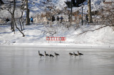 Birds - Winter in Central Park