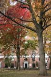 Oak, Maple & NYU Hayden Residence - Washington Square West