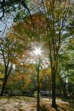 Afternoon Autumn Light