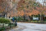 Cherry Tree Foliage at Thompson Street