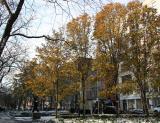 Pear Trees - Fall