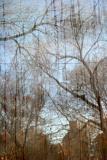 Western Horizon of Washington Square Park  Reflected on NYU's Grey Gallery Window