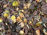 Wood Chips & Foliage - NYU Courant Institute of Mathematics