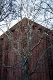 Sycamore Tree & NYU Library