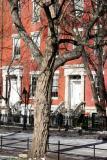 Black Locust Tree & Washington Square North