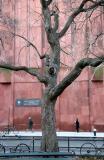 Golden Rain Tree & NYU Library