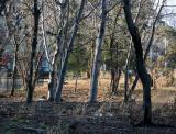 Beech Trees - Time Landscape Garden