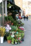 Florist - Spring Flowers