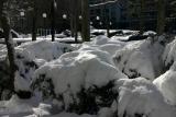 NYU Washington Square Village Gardens